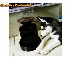 Automatinis naminių gyvūnėlių maitintuvas - 5L